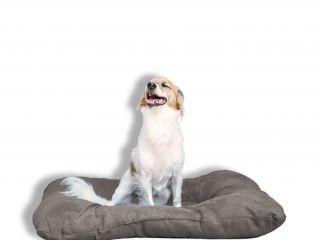 cuscino smarty per animali sogni e capricci pets panna